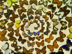 Spirale de papillons !!! (Phil.Claboter) Tags: papillon buterfly spirale spiral casio