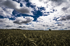 Fields Of Gold (Tim Camin) Tags: summer sky sun tree nature field clouds landscape corn nikon sommer hill natur feld himmel wolken cereals landschaft sonne baum korn hgel getreide d7100