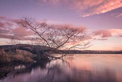 Catching the clouds (lizcaldwell72) Tags: trees hawkesbay sunrise reflection sky newzealand longexposure water laketutira light