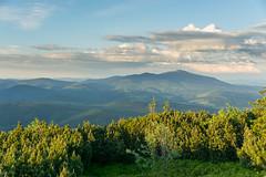 DSC_2502 (czargor) Tags: mountains landscape hill mountainside beskidy inthemountain dogtrekking beskidzywiecki