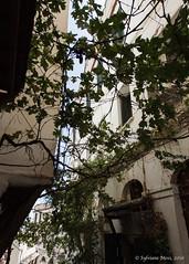 In the Casbah of Algiers (Sylviane Moss) Tags: algeria casbah algrie algiers kasbah alger
