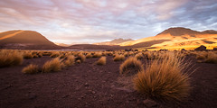 Pampas (ckocur) Tags: chile atacama sanpedrodeatacama northernchile atacamadesert