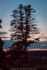 Sunset Dechsendorfer Weiher (pego28) Tags: 2016 dechsendorferweiher klassikamsee konzert sunset sonnenuntergang baum tree bluehour pond lake see weiher blaue stunde blue hour sonntenutergang nikon nkkor d800 highiso water wasser