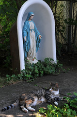 the cat who visited Mary and me  09 (Violentz) Tags: cat virginmarystatue statue virginmary kitty summerday