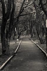 Running Track at Chapultepec Park (lbraun91) Tags: blackandwhite blackandwhitephotography chapultepec chapultepecpark mexico mexicocity nature relax running runningtrack sports trees