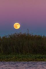 D11359E7 - Full Moon Rises Over The Water (Bob f1.4) Tags: moonrise moon rise sunset water red sky california sacramento delta