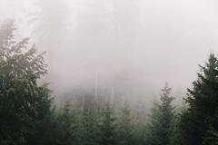 a foggy summer day (desomnis) Tags:
