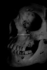Skull (2)_marked (LewisWhitePhotos) Tags: skull skeleton bones human biology studio studiosetup setup blackandwhite reflection detail photo photography picture creepy scary unusual head studioshoot monochrome black background surreal