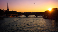 ... (Gabriel M.A.) Tags: olympux omd em5 1240 f28 zuiko olympusmzuikopro1240mmf28 paris france toureiffel eiffeltower seine fleuve river sunset contrejour bridge pont bird cropped 16x9 17mm 24mm flight