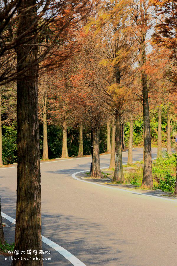 桃園大溪.石園路