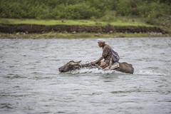 Buffalo Man (Sharif Putra) Tags: people nature animal river asia adventure human malaysia sabah