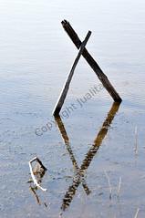 losange (Joëlle Sanchez) Tags: reflet étang bâtons carbonière