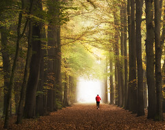 eternal life (Zino2009 (bob van den berg)) Tags: autumn trees light woman netherlands forest healthy alone path walk perspective nederland jogging wald depth fit endless bobvandenberg zino2009 lightrunner
