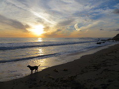 Dog on beach at sunset (Joel Abroad) Tags: california sunset dog beach santamonica pacificocean pacificcoasthighway