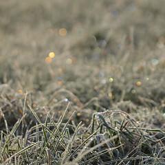 Eclatant (Titole) Tags: grass frost squareformat 3000000 titole nicolefaton