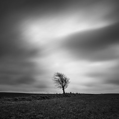 """Keep fighting, little tree"" (thomas bach nielsen) Tags: longexposure blackandwhite tree field square nikon danmark bnw 500x500 nordjylland d80 nd110 bwnd110 tokina1116mmf28 thomasbachnielsen visitdanmark"