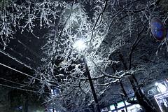 (tenpadego) Tags: winter light white snow black tree nature japan night kyoto          kiyamachi