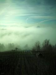 Weinberg-01 (mknt367 (Panda)) Tags: fog sunrise vineyard nebel sonnenaufgang weinberg