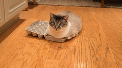 If I Fits, I Sits (Ben Roeger) Tags: cats boxes eggcarton ififitsisits catssittinginboxes