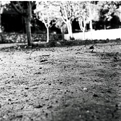 Pure (Ophicina Photografica) Tags: bw white black 120 6x6 tlr film portugal branco analog square lens iso100 photo reflex photos tmax seagull twin preto iso medium format 100 filme serra medio daire minde formato