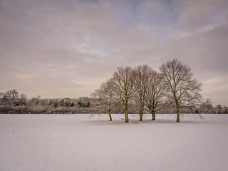 Five Trees In Snow
