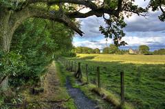 Torwood (Csaba Varju) Tags: wood tree forest landscape scotland nikon hdr torwood d5100