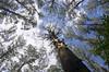 Sherbrook forest (buberfan) Tags: trees sherbrook zenitar16mmf28 pentaxk5