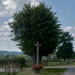 Marcilly la Gueurce , Frankrijk, Bourgondi, regio Charrolais, wegkruis voor rij lindebomen. (petervandelavoir) Tags: france tree monument bomen frankreich burgundy boom frankrijk lime croix linde burgund bourgondi wegkruis tileuil charrolais croixrurale