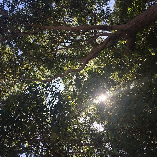 Flat on my back and staring up at the canopy with the sun just peeking through!  Sensational way to spend a Sunday!  #australiagram #australialovesyou #AustraliaConnected #tallebudgera #trees #GoldCoast #goldcoast4u #relax