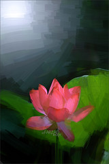 EXPLORED: #49 -                          Lotus Flower Oil Paintings / Lotus flower oil Painting / Photographic images using Akvis Oil Paint Filter - (Bahman Farzad) Tags: red flower wall lotus background paintings decor walldecor walldecoration oilfilter akvis imagebased lotusfloweroilpaintings lotusfloweroilpainting