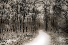 On the way to the palace of the ice princess - magic places Part IV (andreas.klodt) Tags: wood schnee trees blackandwhite bw white snow black ice photoshop blackwhite sony ps sw eis wald weiss bume schwarz hdr weis klodt schwarzundweiss monchrom schwarzundweis andreasklodt