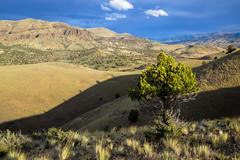 Sutton Mountain Wilderness Study Area (BLMOregon) Tags: oregon centraloregon paintedhills suttonmountain suttonmountainwilderness