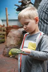 bird bait (embem30) Tags: evan birds budgerigar budgie parakeet woodlandparkzoo willawongstation
