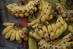 Banana (JohannesLundberg) Tags: monocots burma foodmarket economicbotany musaceae biology musasp myanmar zingiberales musa expedition banan banana unidentified loikaw kayah myanmarburma mm