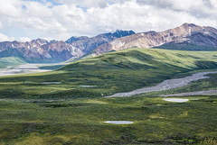 Polychrome Overlook II (ChiiPicts) Tags: denali denalinationalpark alaska mountains landscape usa outdoor