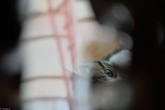 Apparition fline (Mystycat =^..^=) Tags: chat cat gato gatto kitty katze kitten marlifa animal flou artistique