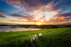 Sunset Mushrooms (Arvid Bjrkqvist) Tags: ocean sunset sun green windmill colors beautiful grass clouds mushrooms evening coast sweden gothenburg vivid rays arendal