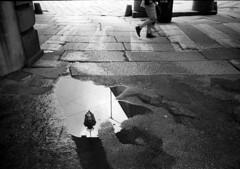 Torino (Valt3r Rav3ra - DEVOted!) Tags: lomo lomography lca lomolca analogico film 35mm valt3r valterravera visioniurbane urbanvisions streetphotography street sovietcamera riflessi reflections torino ursscamera bw biancoenero blackandwhite ilfordhp5 russiancamera