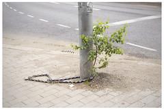 Modern world (mkel) Tags: street city urban tree green finland grey helsinki lock pole chain sidewalk birch asphalt emptiness srninen kurvi