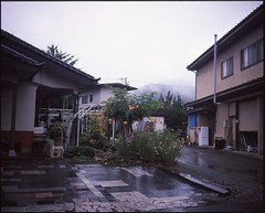 (bensn) Tags: mamiya 7ii 80mm f4 medium format film provia 100f japan flowers