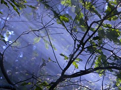 ... (chang_j1) Tags: nature lumire branches extrieur couleur fort feuilles rayons
