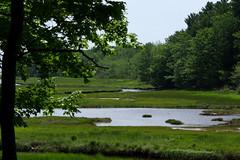 2016-07-17 Rachael Carson NWR (26) (Paul-W) Tags: vacation birds river march marine walk maine wells hike estuary trail saltmarsh saltpan 2016 rachelcarsonnationalwildliferefuge