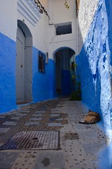 Chefchaouen, Morocco - The Blue Pearl (Mariasphotos) Tags: chefchaouen morocco blue pearl medina goahead tour skidmore 2016 chaouen
