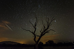 Star Shooting (Edward Wolohan) Tags: astrophotography astronomy astrophoto astro tree deadtree nightsky night outdoor nature summer stars shootingstar perseids meteorshower meteors fireball