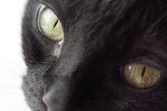 mood for summer (margycrane) Tags: cat blackcat ola czarnykot