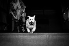 Chi Mai (Thomas Demeulemeester) Tags: dem bw blackwandwhite city dog femme nb noiretblanc running stairs subway ville woman bucarest canoneos600d chiens climbingstairs courrant day ef50mmf18ii entredeux escalier handrails inbetween journe metro montantlesescaliers rembarde