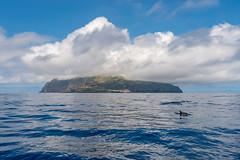 Corvo (Antero vila) Tags: corvo azores blue seascape island dolfin