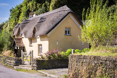 Thatch (Jez22) Tags: cottage house thatched roof old architecture rural building traditional thatch home village straw construction rustic country structure exterior english england tourism idyllic devon colour quaint copyright jeremysage