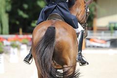 IMG_8259 (dreiwn) Tags: dressage dressur dressuur pferd reitturnier turnierreiten pferdesport horse horseback horseriding equestrian reitverein dressurprüfung kandare doublebridle reiten pferde reitplatz ridingarena