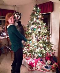 2014_December08 She's Home   342/365 (aflowergirl) Tags: family husky huskador christmas2014